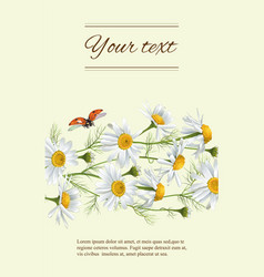 Chamomile flowers banner vector