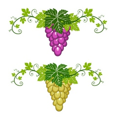 Grapes border with leaves vector