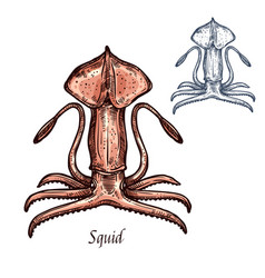 Squid isolated sketch for food design vector