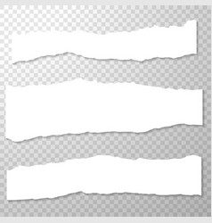 Long horizontal torned off pieces of paper empty vector