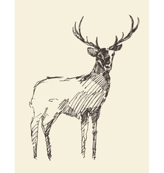 Sketch deer vintage hand drawn vector image vector image