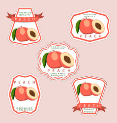 the theme peach vector image vector image