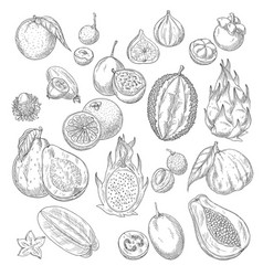 Exotic or tropical fruits sketch icons set vector