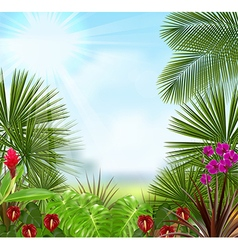 Beautiful tropical background vector image vector image