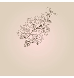 Vintage with grape branch vector