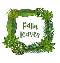 square frame of tropical palm leaves with place vector image