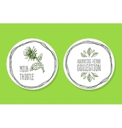 Ayurvedic herb - product label with milk thistle vector