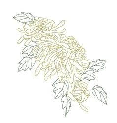 Chrysanthemum flower vector