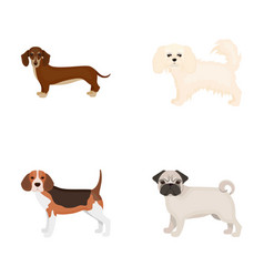dog animal domestic and other web icon in vector image vector image