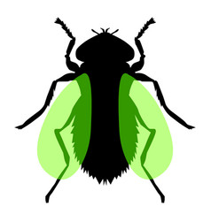 fly insect vector image vector image