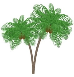 Silhouette palm tree with coconuts vector