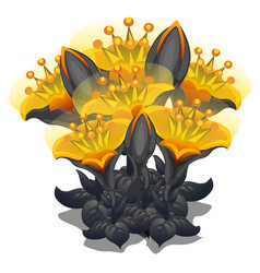 Bouquet of black and yellow flowers vector