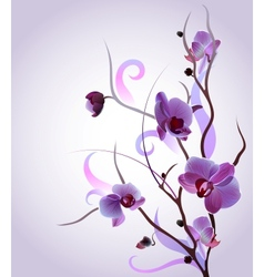 greeting card with orchid brunch vector image vector image