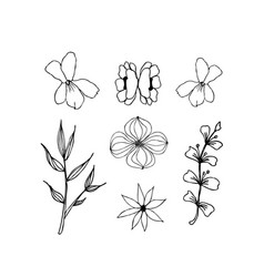 herbal floral drawing isolated liner vector image vector image