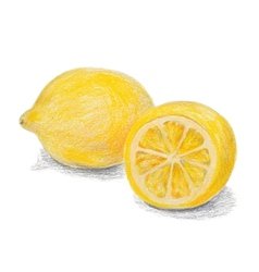 Hand drawn colored pencils lemon sketch with vector