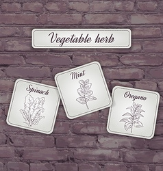 Flashcard with vegetable herb mint oregano spinach vector