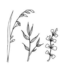 herbal drawing isolated liner vector image vector image