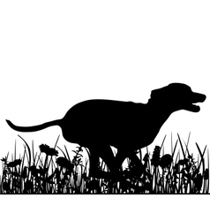 Dog in the meadow vector