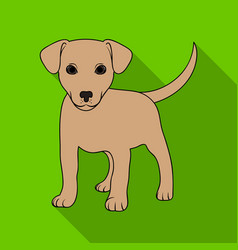 Puppy labradoranimals single icon in flat style vector