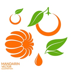 Mandarin set vector