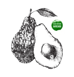 Hand drawn avocado vector