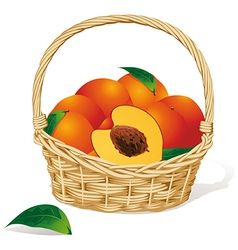 Basket of peaches vector