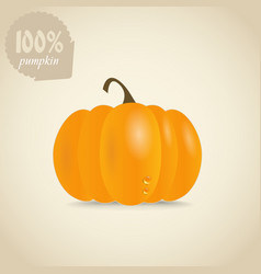 Cute orange pumpkin vector image vector image