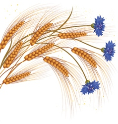 Flowers and ears of wheat vector