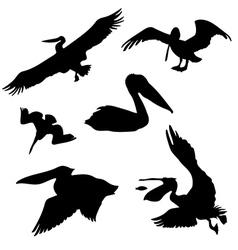 Pelicanset vector