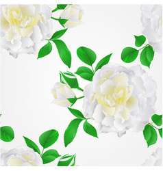 Seamless texture white rose with buds and leaves vector