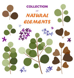 collection of natural elements vector image