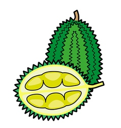 Durian isolated on a white background vector image vector image