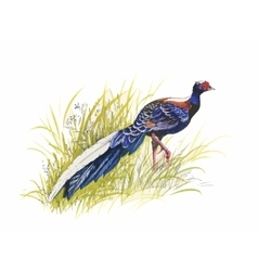 Hand drawn pheasant in the grass and flowers vector