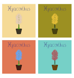 Assembly flat plant hyacinthus vector