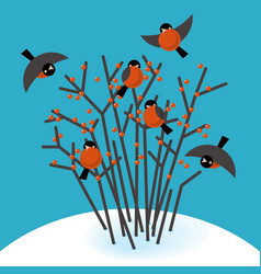 bullfinch in the bushes vector image