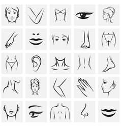 Female body parts icons vector