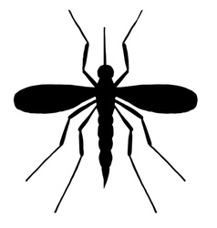 High quality mosquito vector