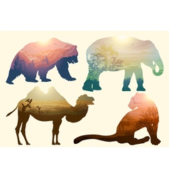 Bear elephant camel and Leopard for your design wi vector image vector image