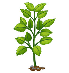 green tree growing from underground vector image vector image
