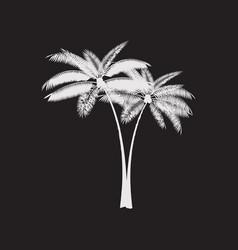 palm leaf background vector image vector image