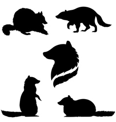 raccoonSet vector image vector image