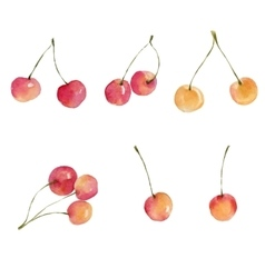 Watercolor cherries isolated on white background vector