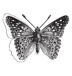 Eyed emperor moth vintage vector