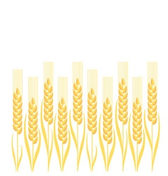 Gold wheat ion white background vector