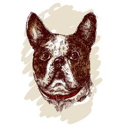 hand drawn bulldog sketch vector image vector image