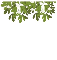 Christmas upper edge mistletoe with white flowers vector
