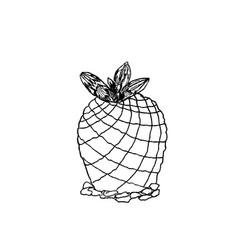 hand drawn pelecyphora pseudopectinata liner vector image