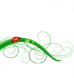 Ladybug on grass vector