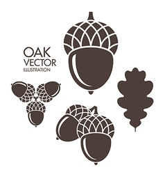 Oak Acorn Leaf vector image