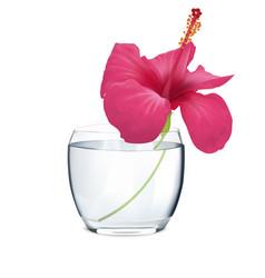 flowers of pink hibiscus in vase vector image vector image